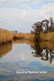 Marsh-19.jpg