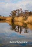 Marsh-20.jpg
