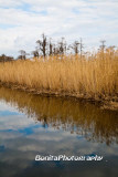 Marsh-22.jpg