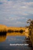 Marsh-23.jpg