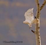 WhiteHawk-6609.jpg
