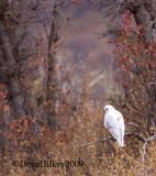 whitehawk7594-08oct2009-SF.jpg