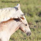 horses-18July2010-SandWash.jpg
