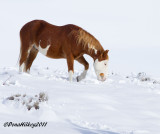 Cowboy-8jan2011SandWash-web.jpg
