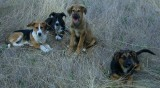 Dogs currently needing a home
