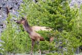 1769 Elk
