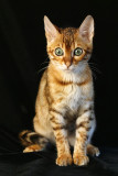 Old Favorite Cat Photos
