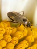 Bug  (0003).jpg