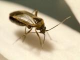 Bug  (0004).jpg