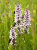 Some Warwickshire Wild Life Nature Reserves