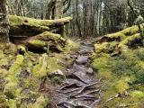 Trail through the moss