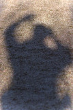 Shadow on pond