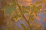 Electric leaves