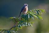 Young bird on a limb