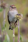 Tall perch