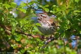 Bird in the bush