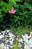 13-0659 Flora