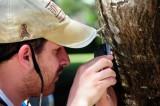 14 1077 Jonathan taking pictures of nasutiform termites