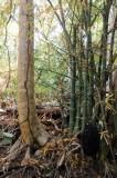 14 1175 Termite tubes; bamboo