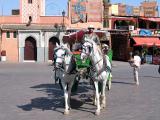 Marrakech Caleche traditionnelle_7726.jpg