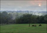 Grimes Mill Farm in the fog