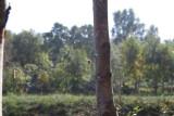 Spindeln i nätet Ljungen 27.9-08