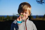 Mattheus med ett Taigasjung Stora fjäderägg Västerbotten