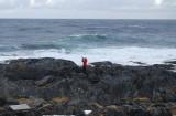 Algot hulk hogan fotar Vittrut vid Pomes Bay
