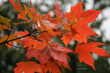 Sign of Fall