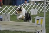dog_shows