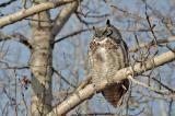 owl.DSC_9505.jpg