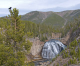 z P1060705 raven and waterfall in Yellowstone.jpg