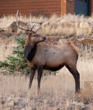 Scenes in Estes Park , Colorado