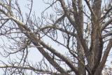 zzc2A_MG_0856 Tree 180 TC 1-4.jpg