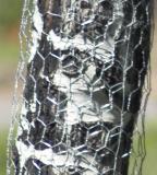 zC1_MG_0986 238mm fenced aspen.jpg