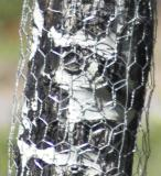 zC2_MG_0983 238mm x1-4 fenced aspen.jpg