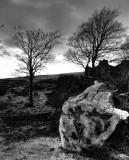 Fallen tree, Isle of Man