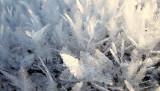 Christmas Tree Crystals!