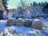 On a cold and frosty morning  - Glen Tanar