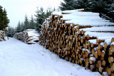 Logging on the Fungle