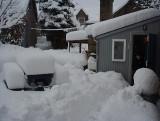 The Back Garden 2001  - 19 Snow