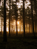 Misty Pines Two
