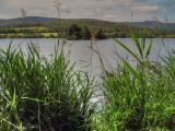 Crannog Through The Reeds  - 7 months on...
