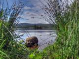 Crannog Through The Reeds Take 2