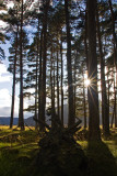 Through the Trees  - Glen Muick