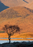 Loch Na Achlaise - Island Tree at Sunrise