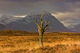 That dead tree.....Rannoch Moor