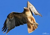 San Joaquin Bird Sanctuary