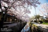 kyoto_060.jpg