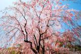 kyoto_090.jpg